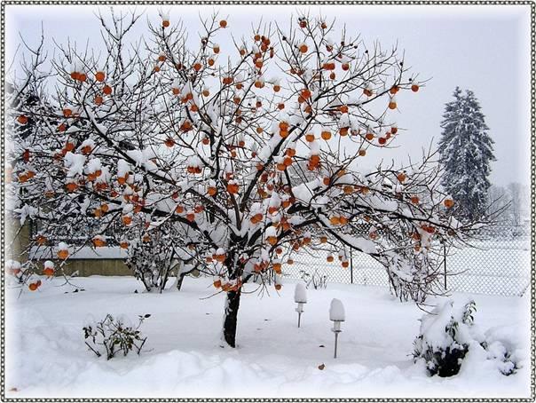L'hiver vous fait penser à quoi? Vague-de-froid-hiver-2008-2009-thomas-24-11-2008_clip_image002