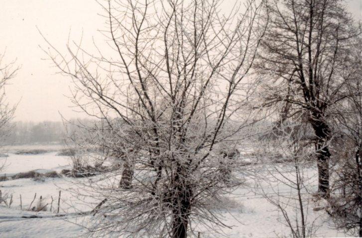 http://www.alertes-meteo.com/vague_de_froid/photos_vagues_de_froid_2/neige_85_3.jpg
